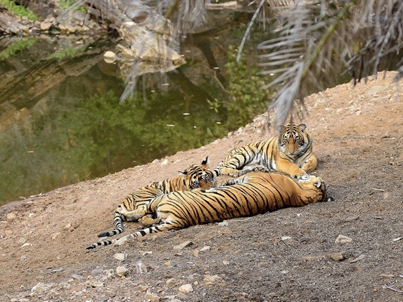 Fathom Your Vacation with the Mesmerizing Sightseeing in Jim Corbett National Park