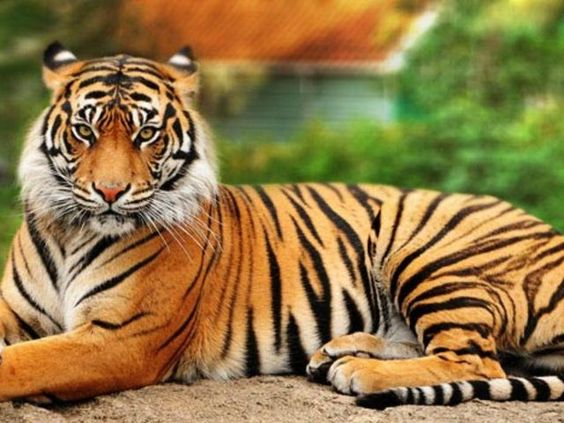 The Best Accommodation Guide to Make Your Trip More Convenient at Jim Corbett