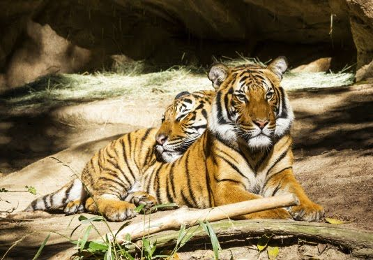 Aplomb to Become the Queen of Jim Corbett National Park