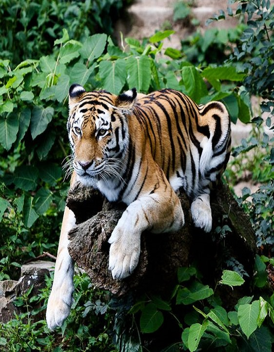 Hunting For A New Gateway For The Delhi Locales To Jim Corbett National Park
